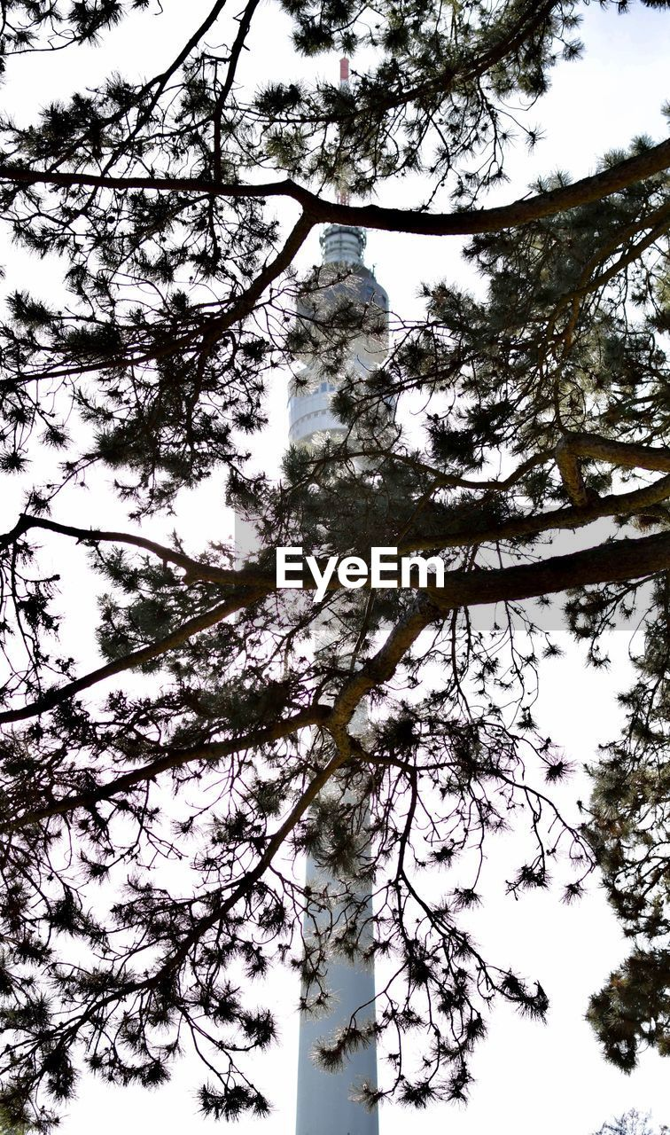 tree, plant, low angle view, sky, beauty in nature, branch, growth, nature, no people, tranquility, day, trunk, tree trunk, outdoors, tall - high, tranquil scene, tree canopy, idyllic, directly below, forest