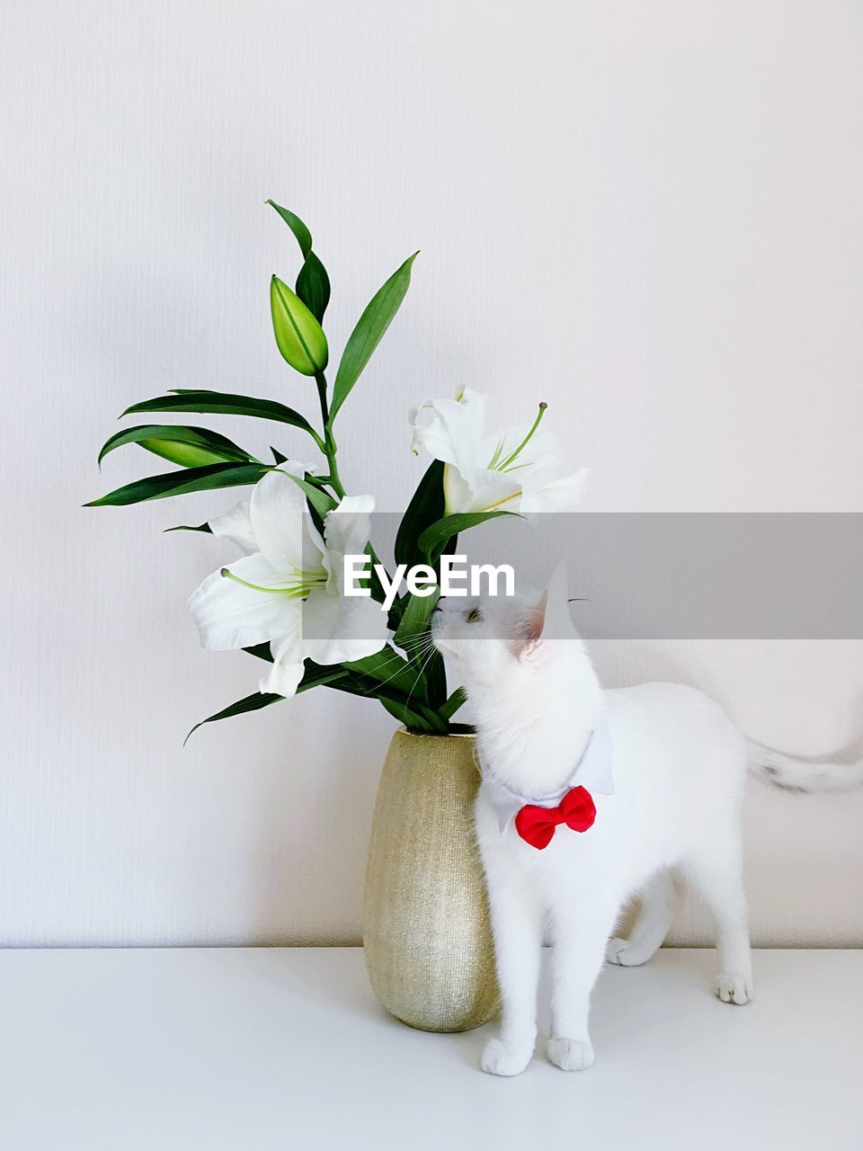 mammal, domestic animals, pets, plant, domestic, flower, animal themes, flowering plant, white color, one animal, animal, indoors, vase, vulnerability, fragility, beauty in nature, no people, nature, cat, vertebrate, domestic cat, flower head, flower arrangement