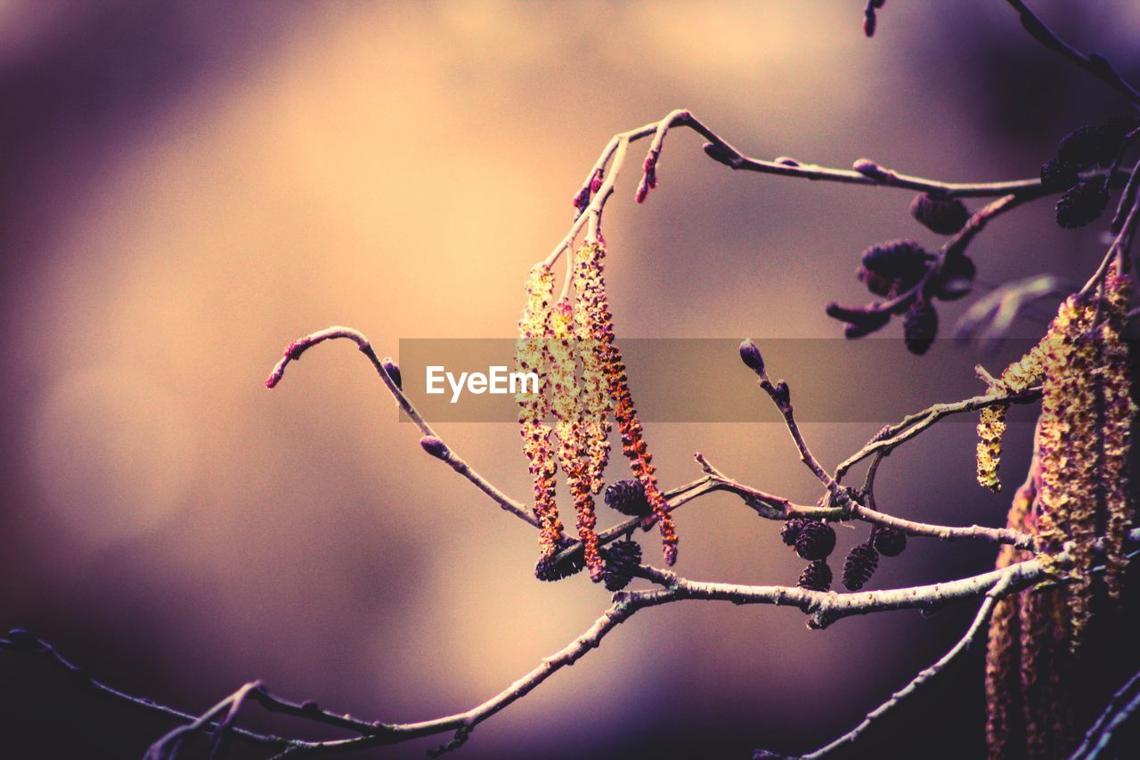 plant, focus on foreground, close-up, beauty in nature, growth, nature, no people, selective focus, day, twig, flower, animals in the wild, animal wildlife, freshness, outdoors, branch, fragility, tree, one animal, flowering plant