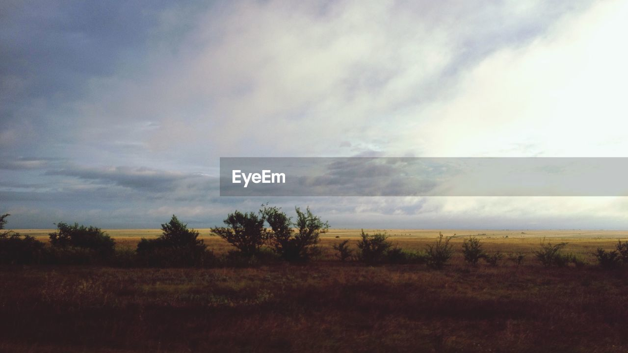 sky, environment, landscape, tranquil scene, tranquility, cloud - sky, scenics - nature, beauty in nature, land, field, non-urban scene, tree, nature, plant, no people, growth, outdoors, grass, idyllic, day