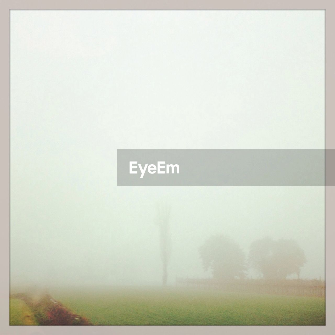 Scenic view of field during foggy weather at dusk