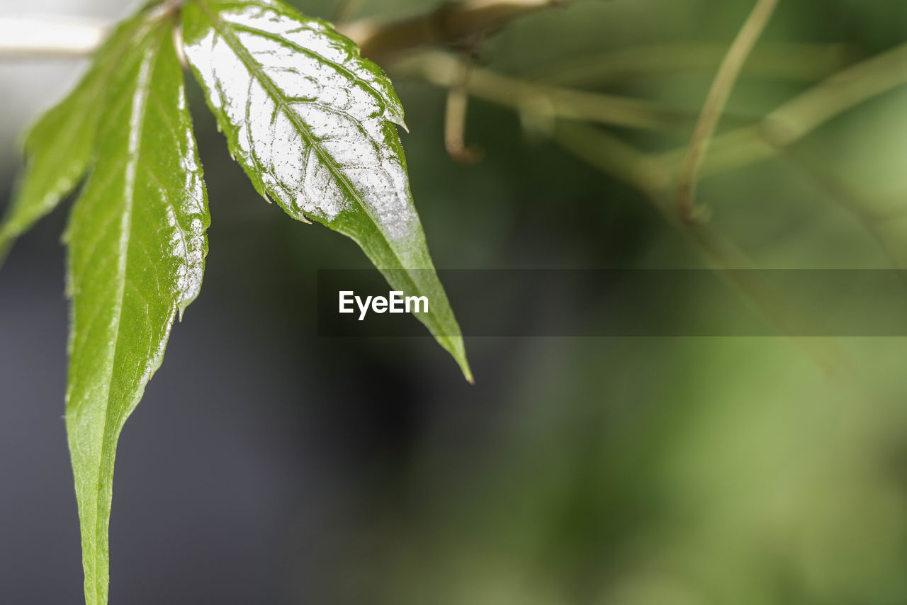 leaf, green color, growth, focus on foreground, plant, nature, close-up, day, outdoors, no people, beauty in nature, freshness