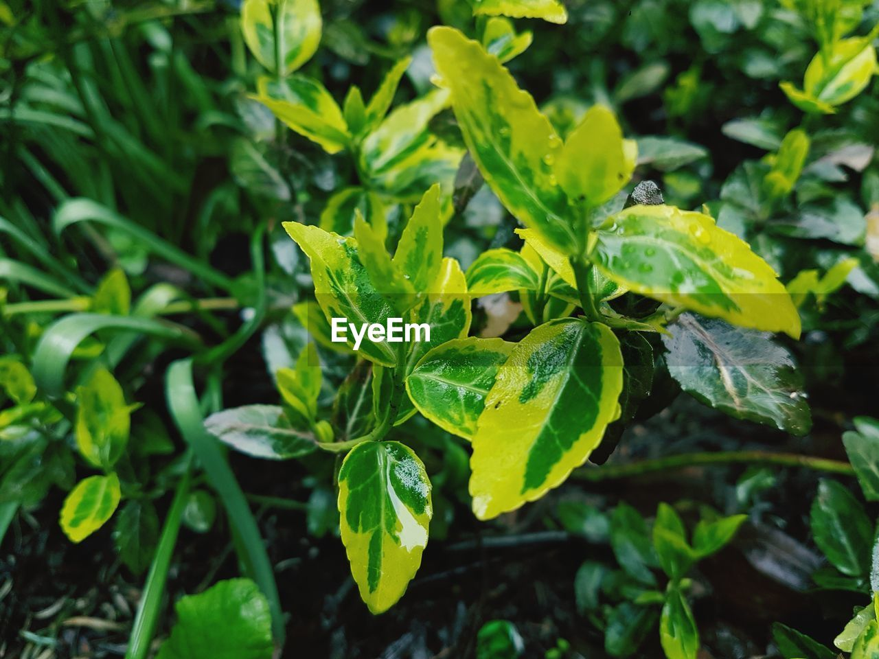 growth, green color, plant, leaf, plant part, beauty in nature, close-up, nature, day, no people, freshness, focus on foreground, fragility, outdoors, vulnerability, high angle view, selective focus, tranquility, land, field