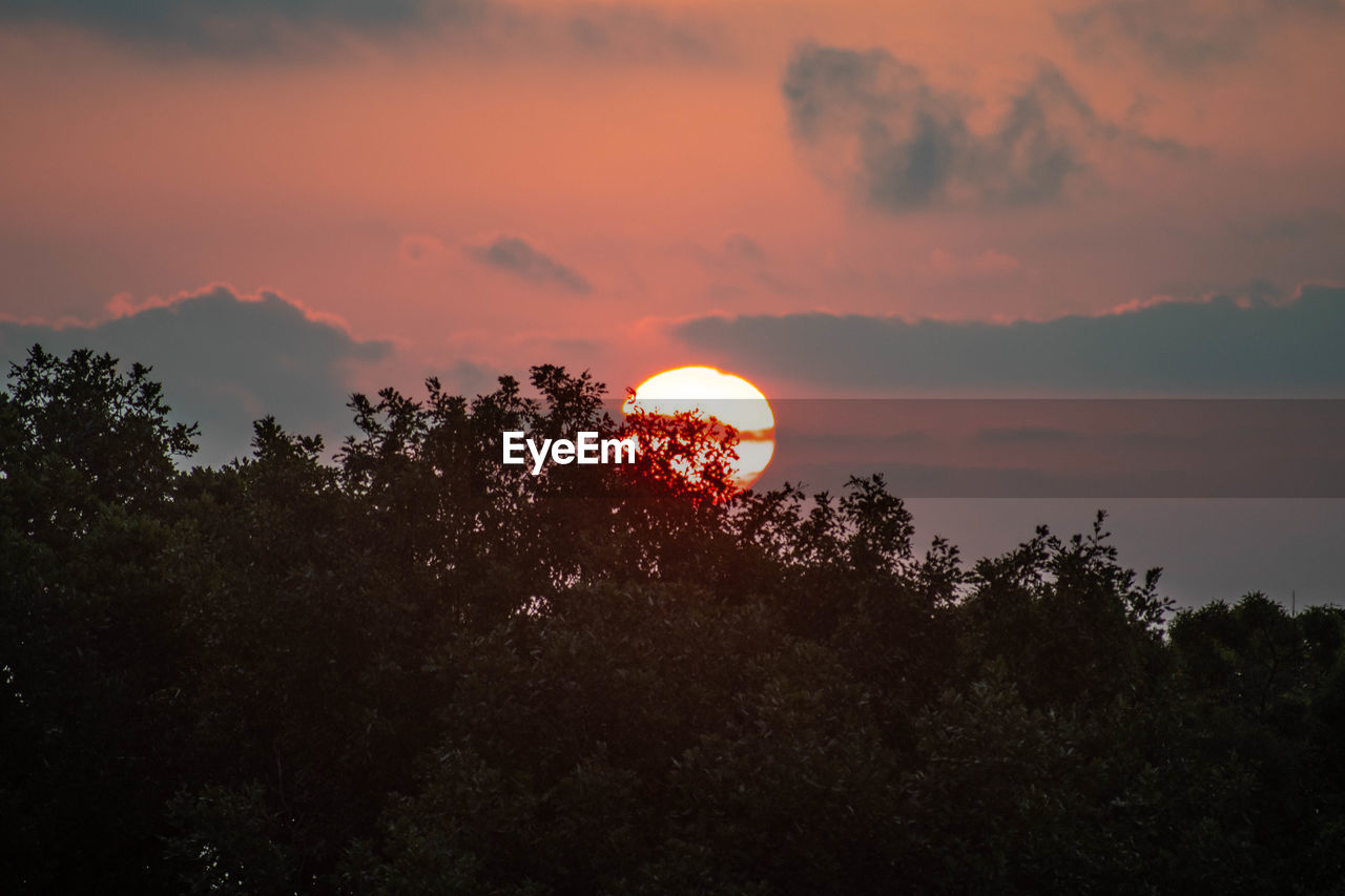 sky, tree, beauty in nature, plant, scenics - nature, tranquility, orange color, sun, sunset, tranquil scene, cloud - sky, silhouette, idyllic, nature, no people, outdoors, non-urban scene, growth, sunlight, shape, eclipse
