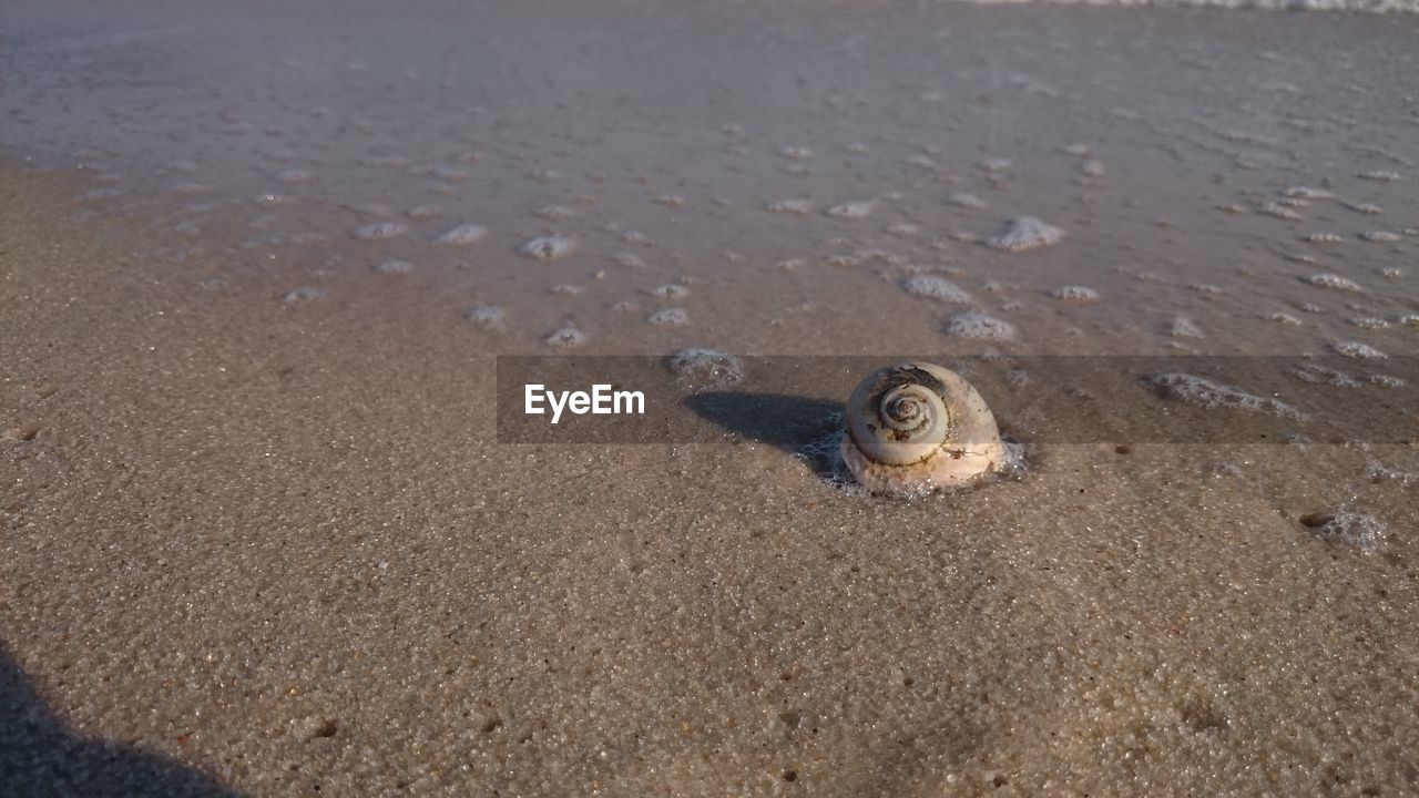 Snail on shore at beach