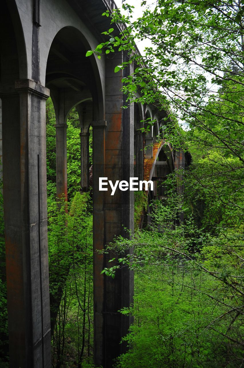 arch, architecture, built structure, day, growth, connection, plant, tree, outdoors, no people, bridge - man made structure, nature