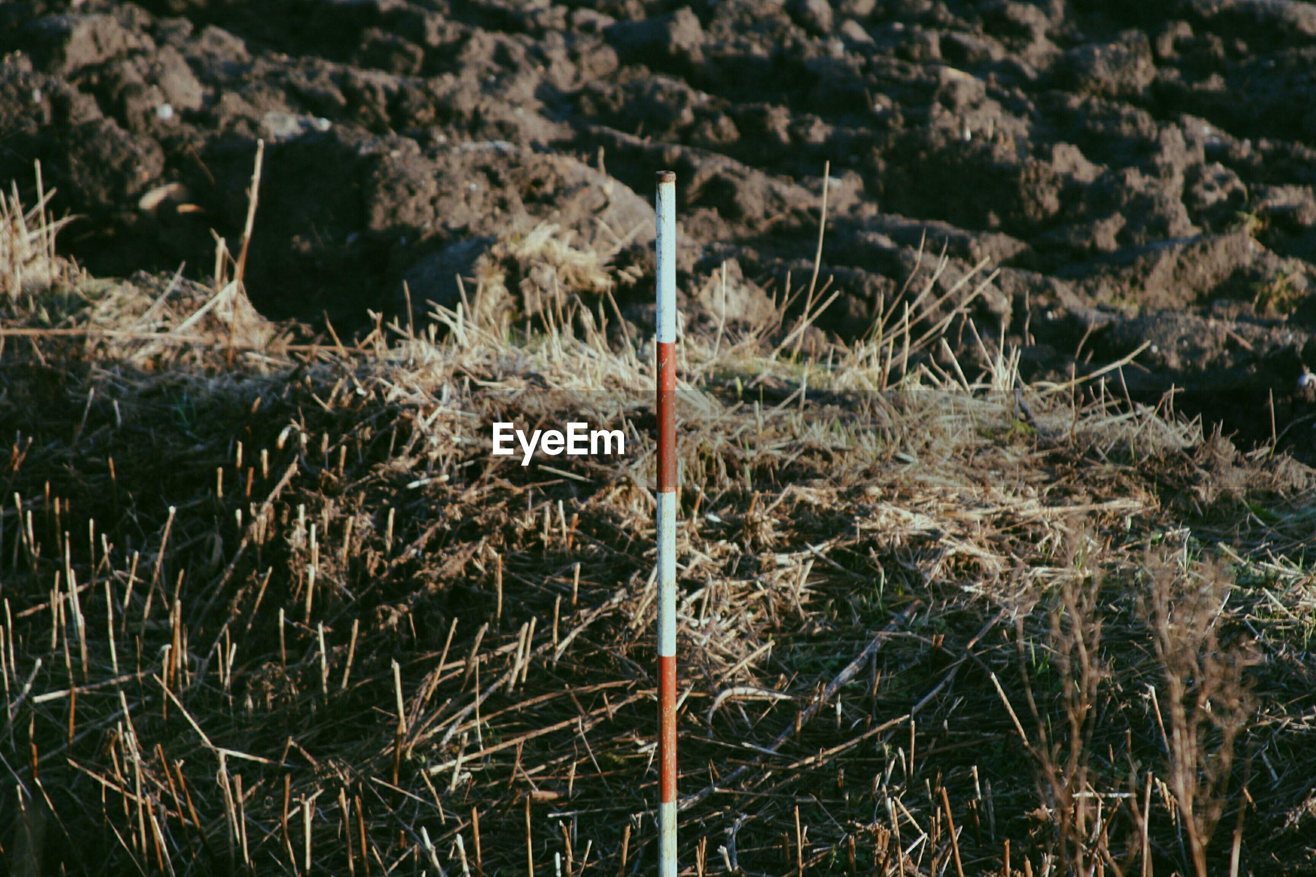 Pole on grassy field