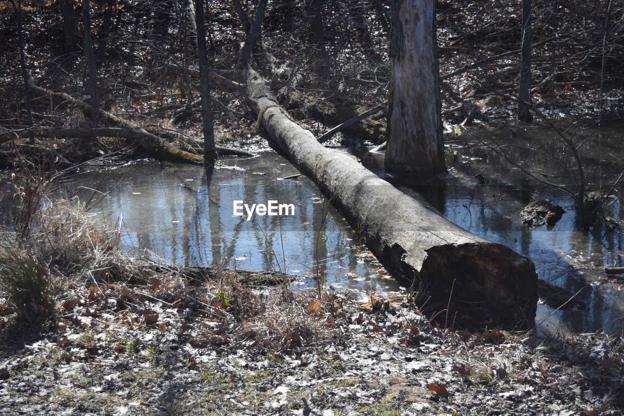 tree, forest, tree trunk, nature, no people, day, outdoors, branch, growth, water, beauty in nature