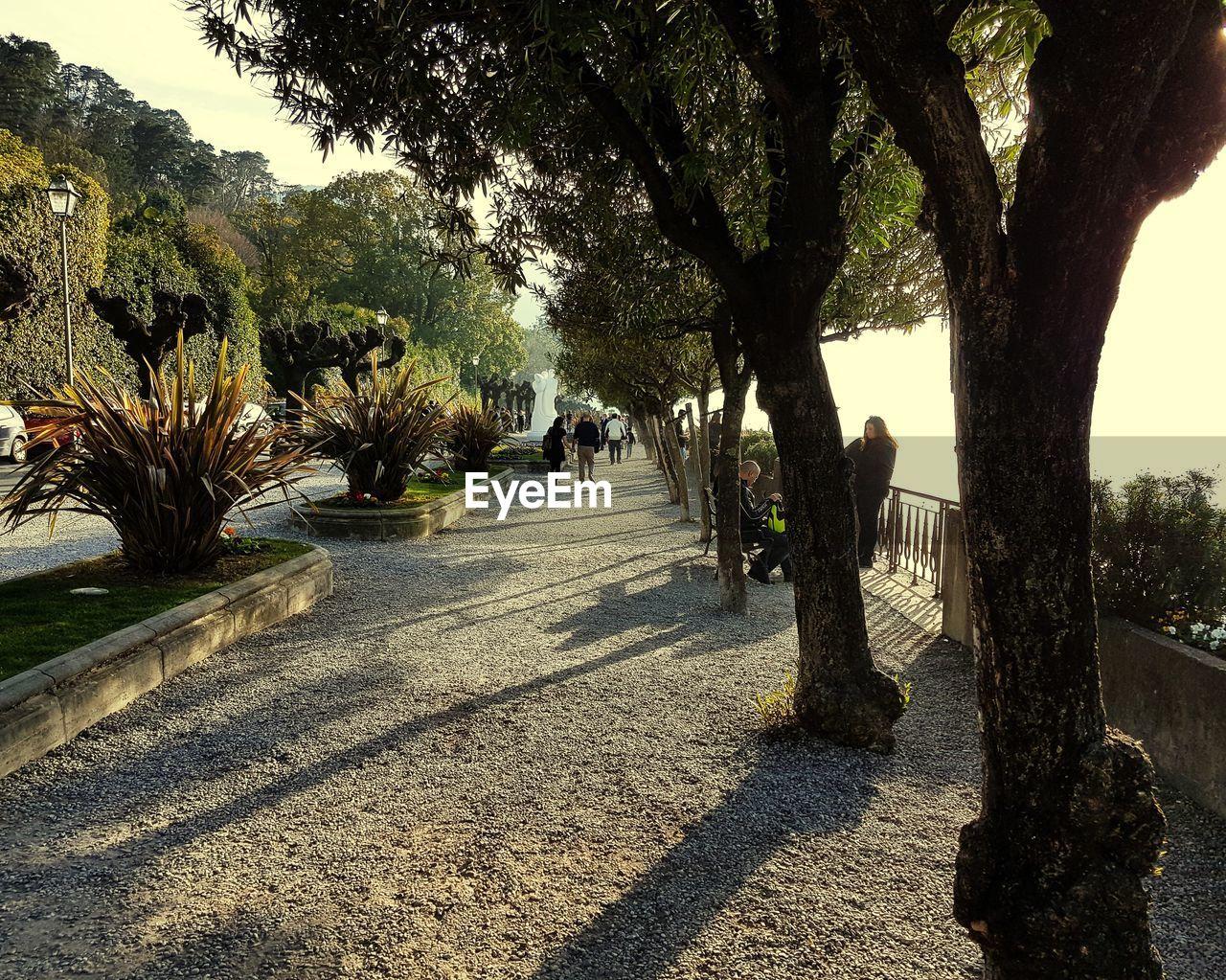 Treelined On Walkway During Sunny Day