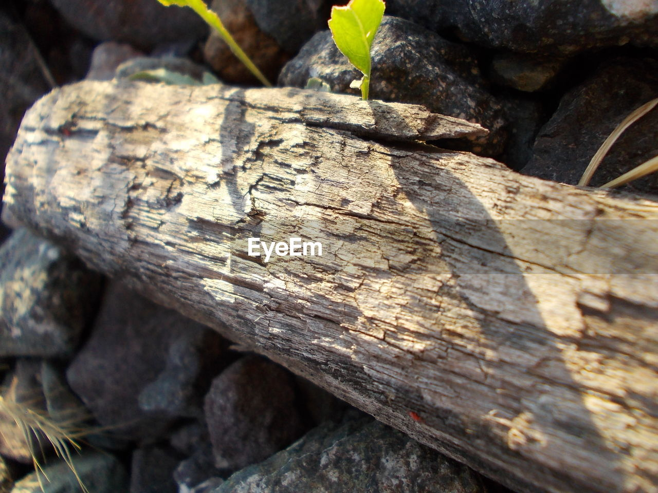 wood - material, day, outdoors, close-up, log, textured, no people, nature, tree stump