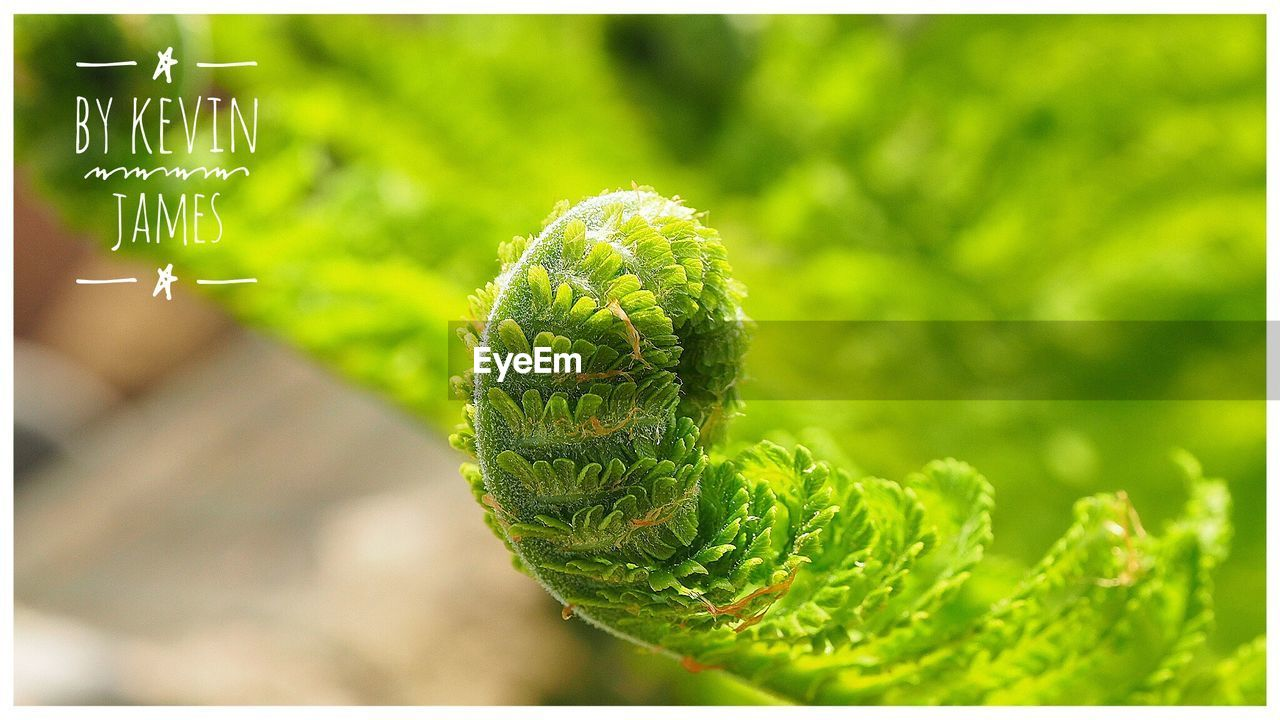 green color, nature, plant, growth, day, close-up, no people, focus on foreground, outdoors, animal themes, beauty in nature, freshness