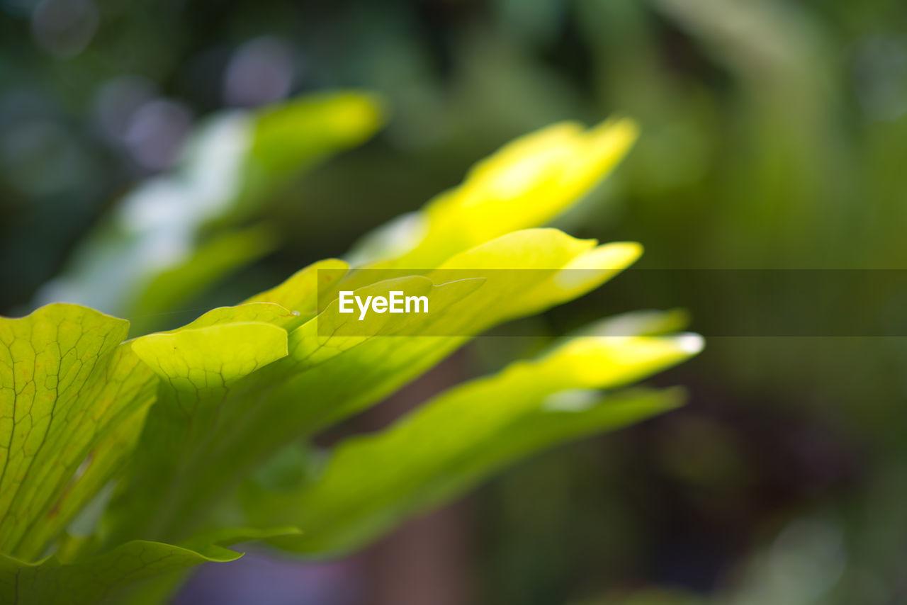 CLOSE-UP OF YELLOW FLOWERING PLANT DURING RAINY SEASON