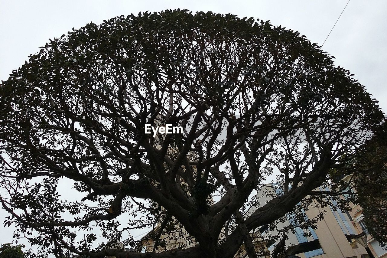 tree, low angle view, nature, branch, day, outdoors, growth, no people, tree trunk, sky, beauty in nature