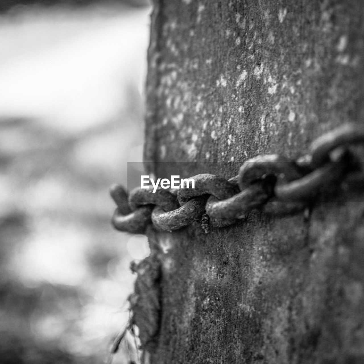 focus on foreground, strength, metal, security, rusty, outdoors, close-up, no people, chain, day, nature