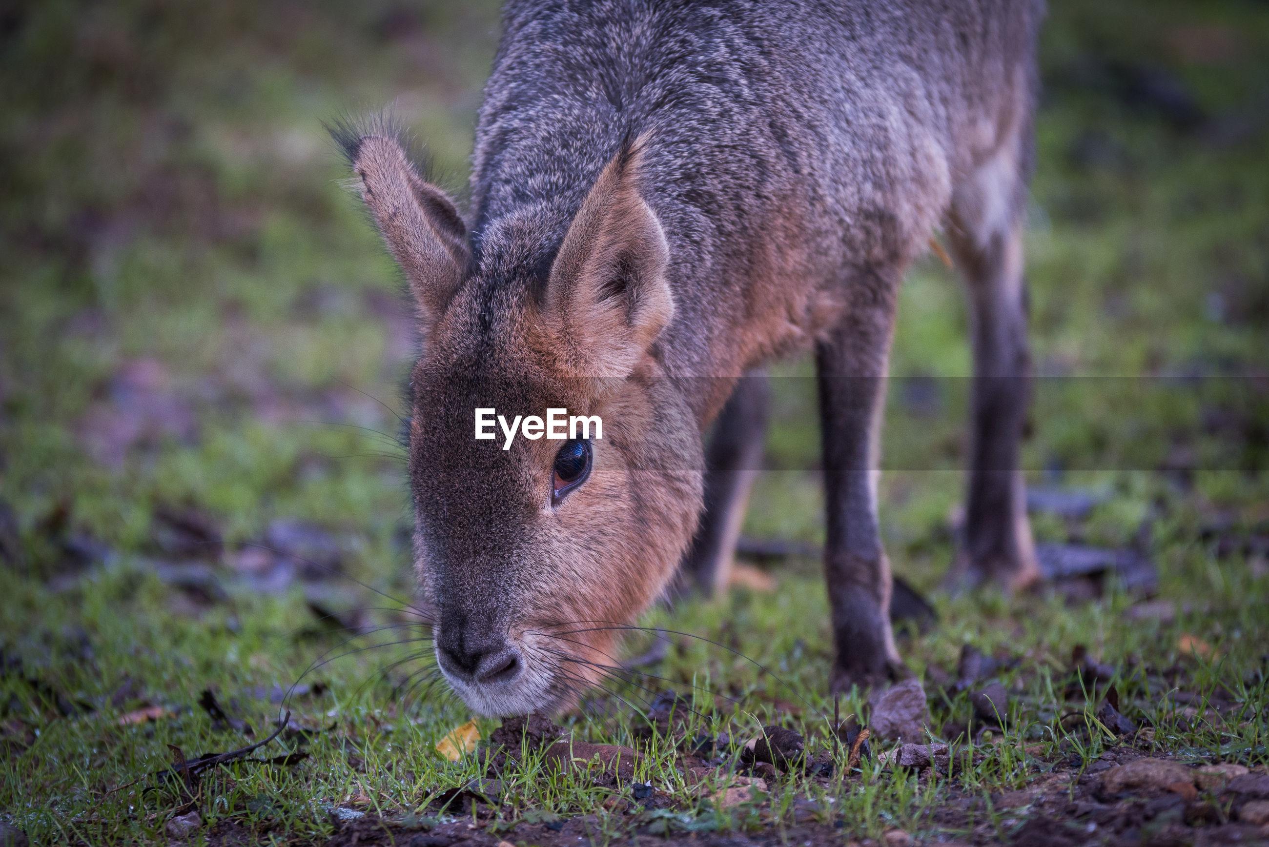 Close-up of mammal