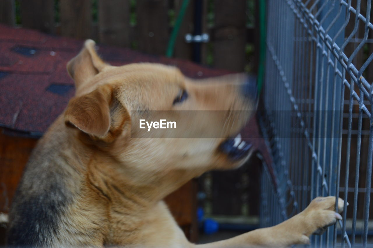 pets, domestic animals, animal themes, dog, mammal, one animal, indoors, no people, focus on foreground, close-up, day