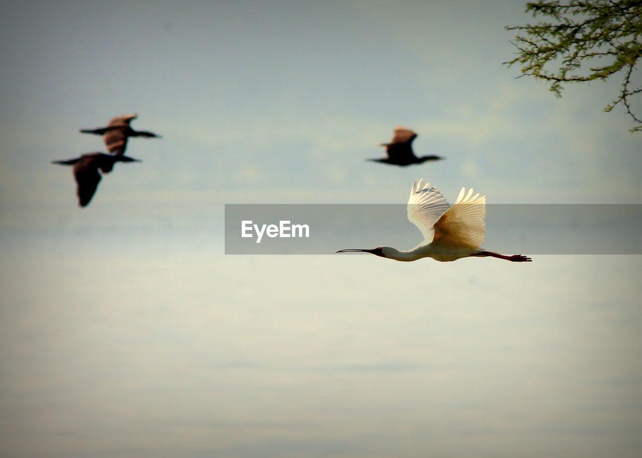 Four Birds Flying Over Sea