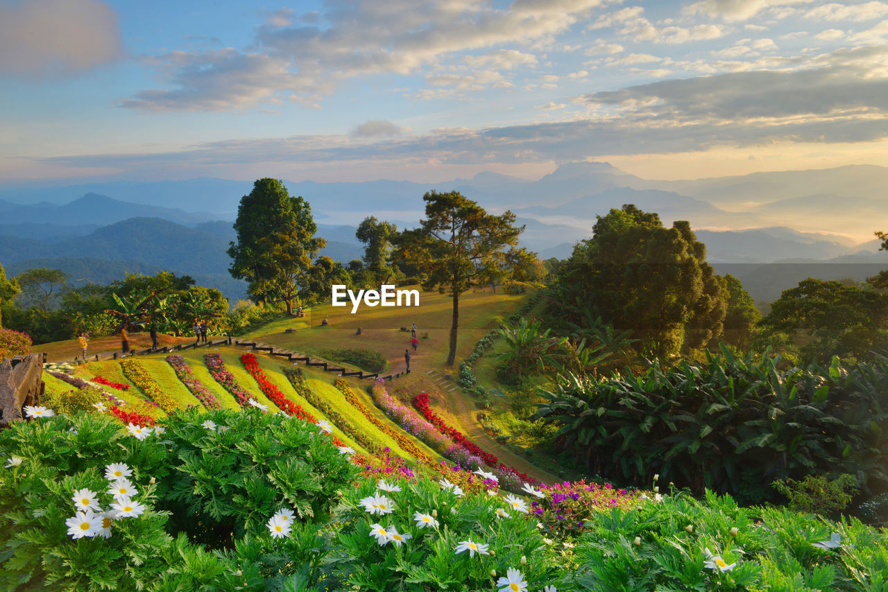 View Of Botanical Garden With Flowers And Trees Against Sky