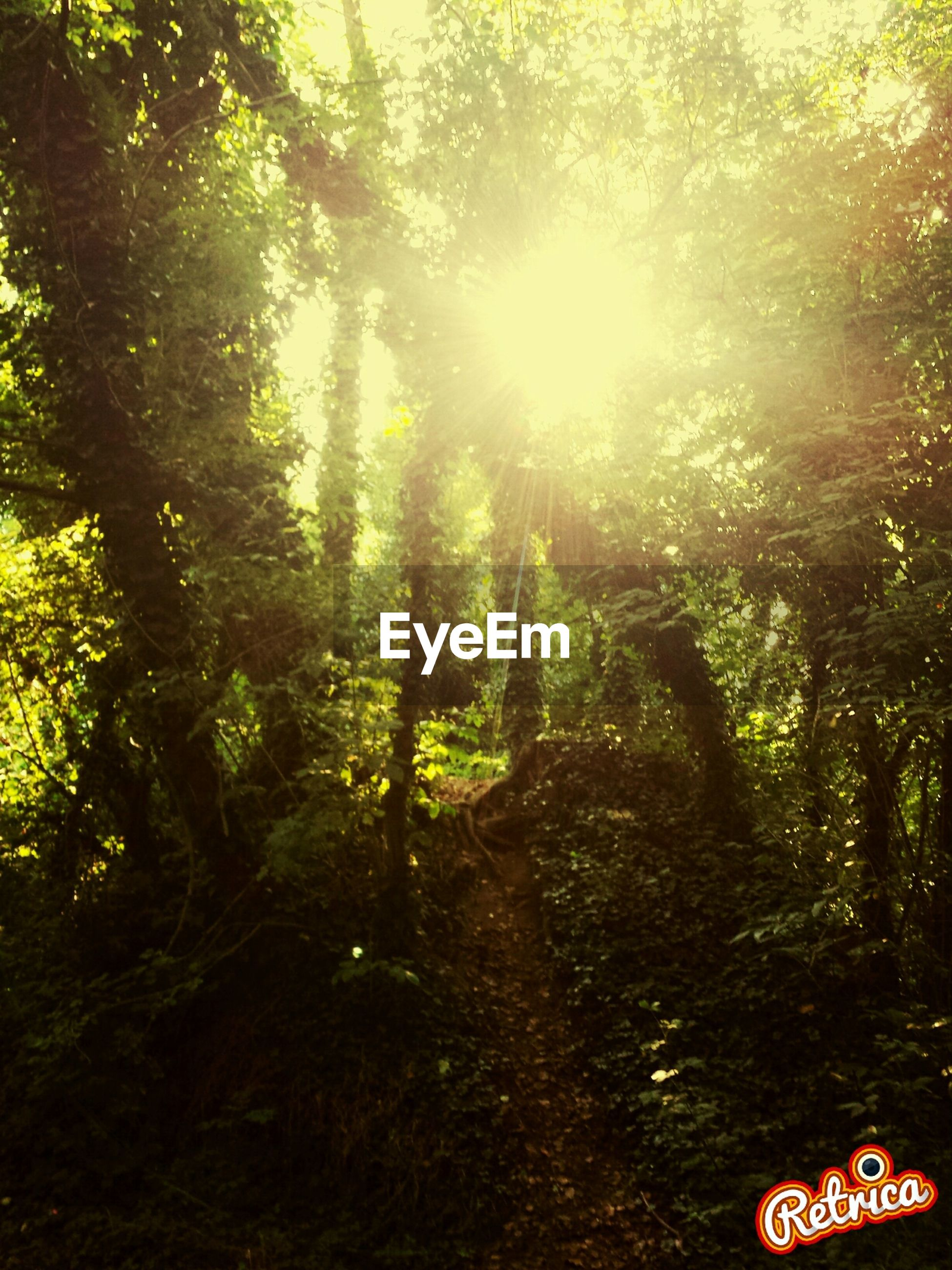 tree, growth, tranquility, forest, nature, sunlight, tranquil scene, beauty in nature, scenics, tree trunk, sun, branch, green color, woodland, sunbeam, low angle view, day, outdoors, no people, non-urban scene