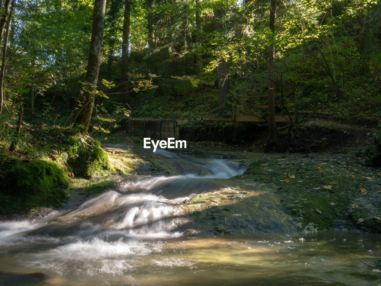 plant, tree, forest, water, nature, motion, beauty in nature, land, growth, scenics - nature, no people, blurred motion, day, green color, tranquility, outdoors, flowing water, environment, flowing, power in nature