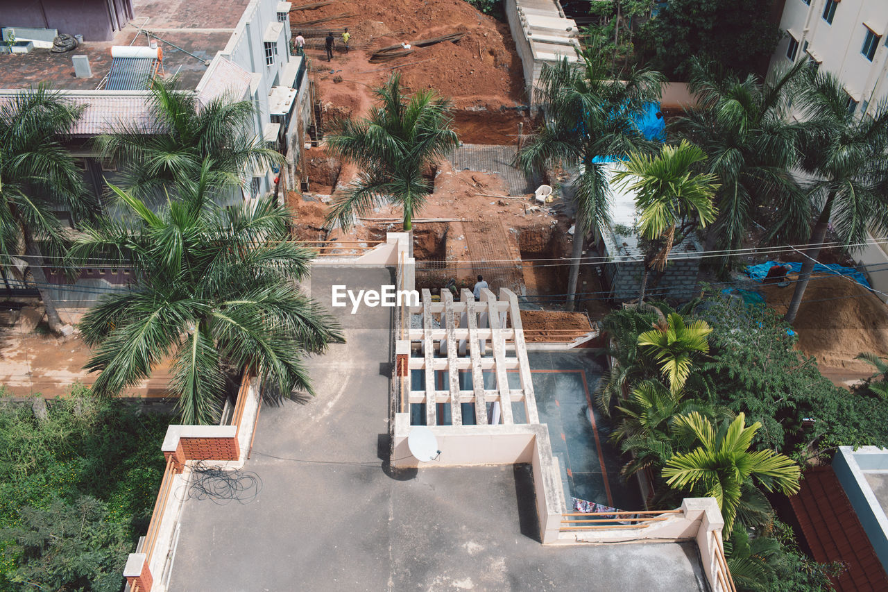 plant, architecture, built structure, tree, building exterior, palm tree, tropical climate, nature, growth, building, day, potted plant, no people, high angle view, outdoors, house, vertebrate, animal themes, one animal, front or back yard