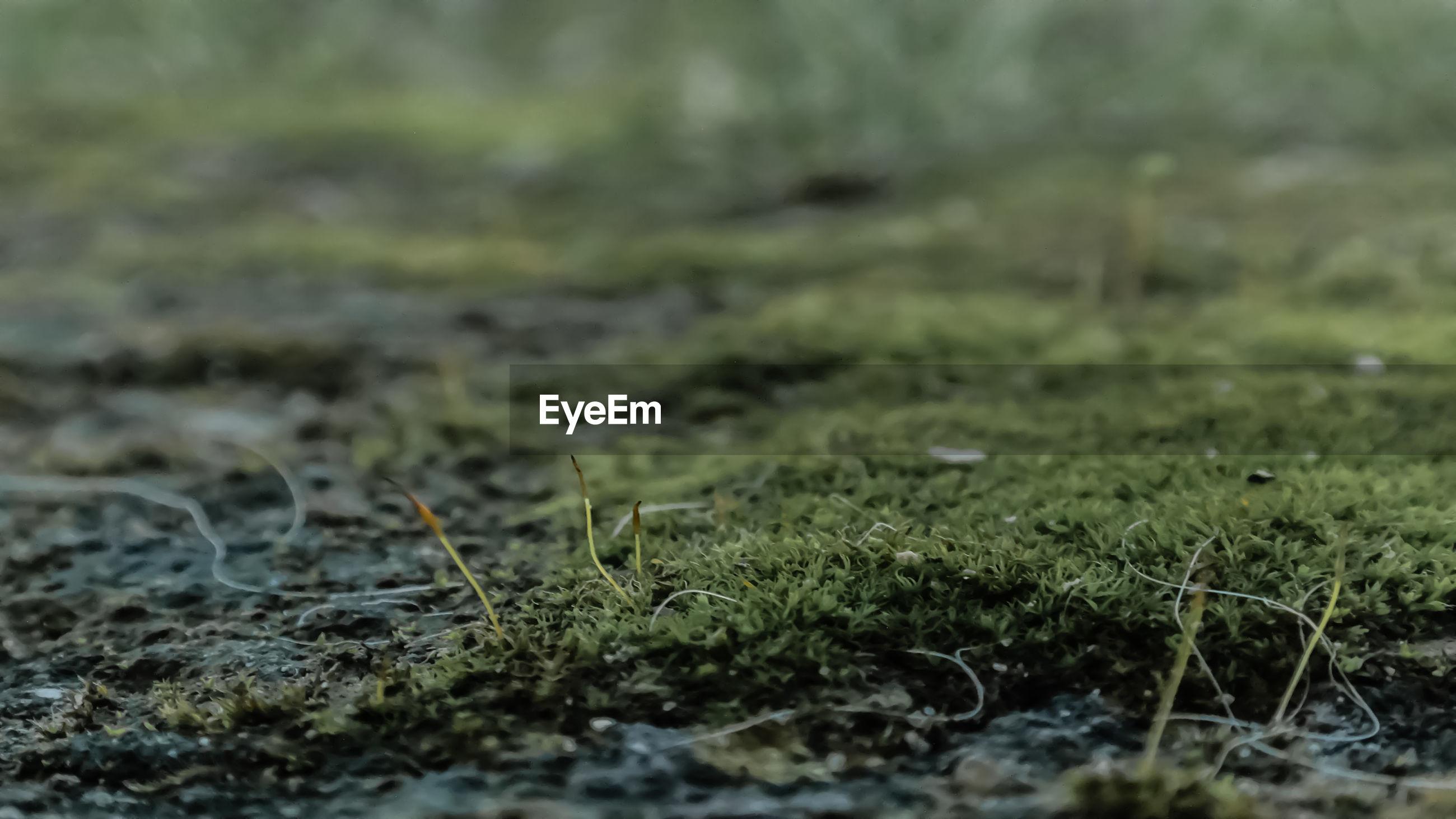 Plant growing on field