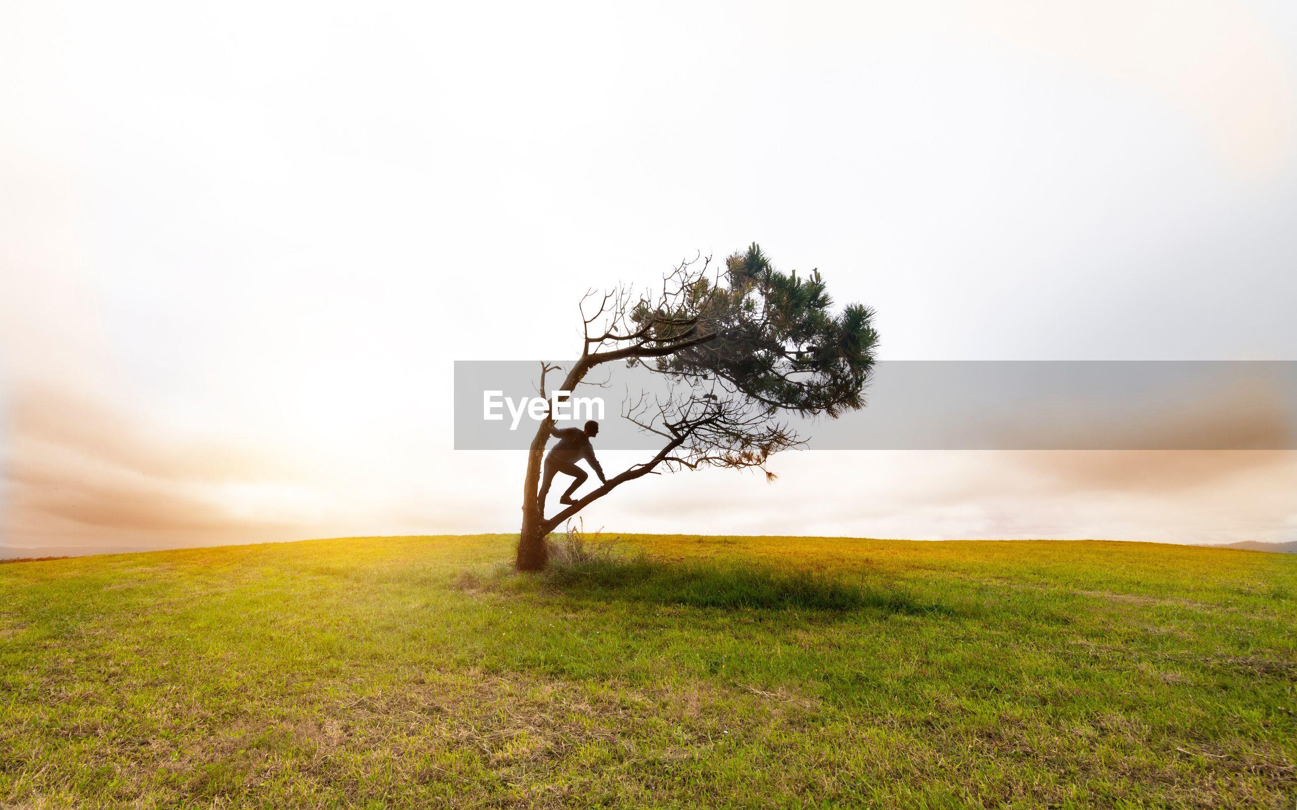 Man on a tree on field against sky