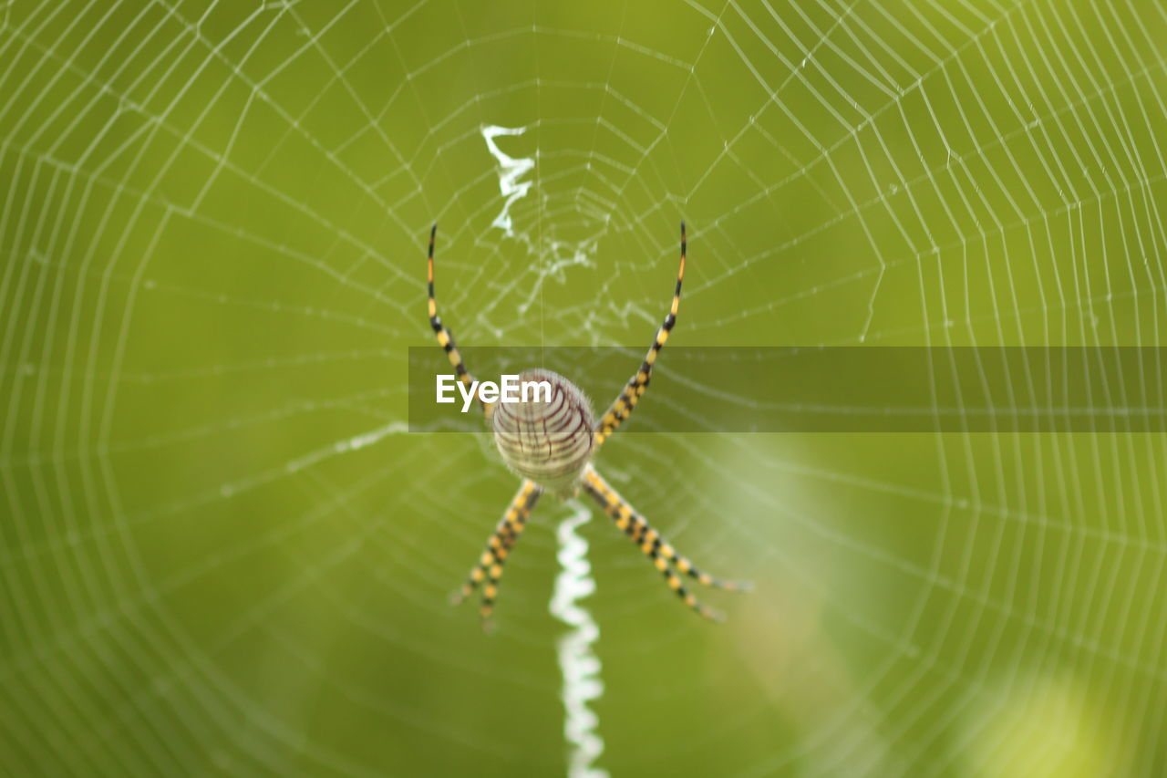 CLOSE-UP OF SPIDER ON WEB OUTDOORS