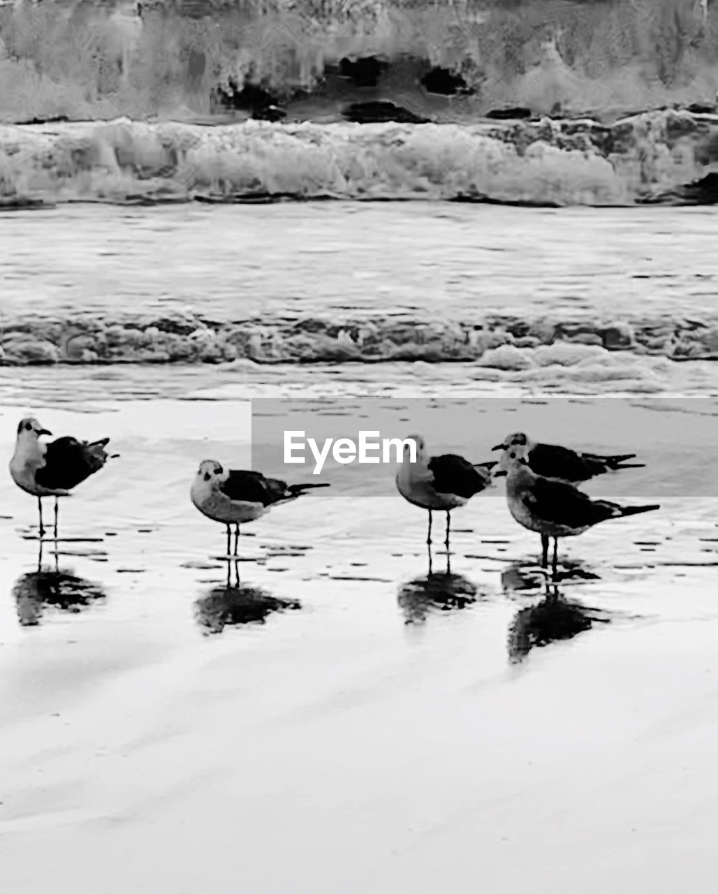 bird, snow, cold temperature, winter, group of animals, animal themes, animals in the wild, animal wildlife, animal, water, vertebrate, beauty in nature, nature, no people, scenics - nature, frozen, day, lake, flock of birds