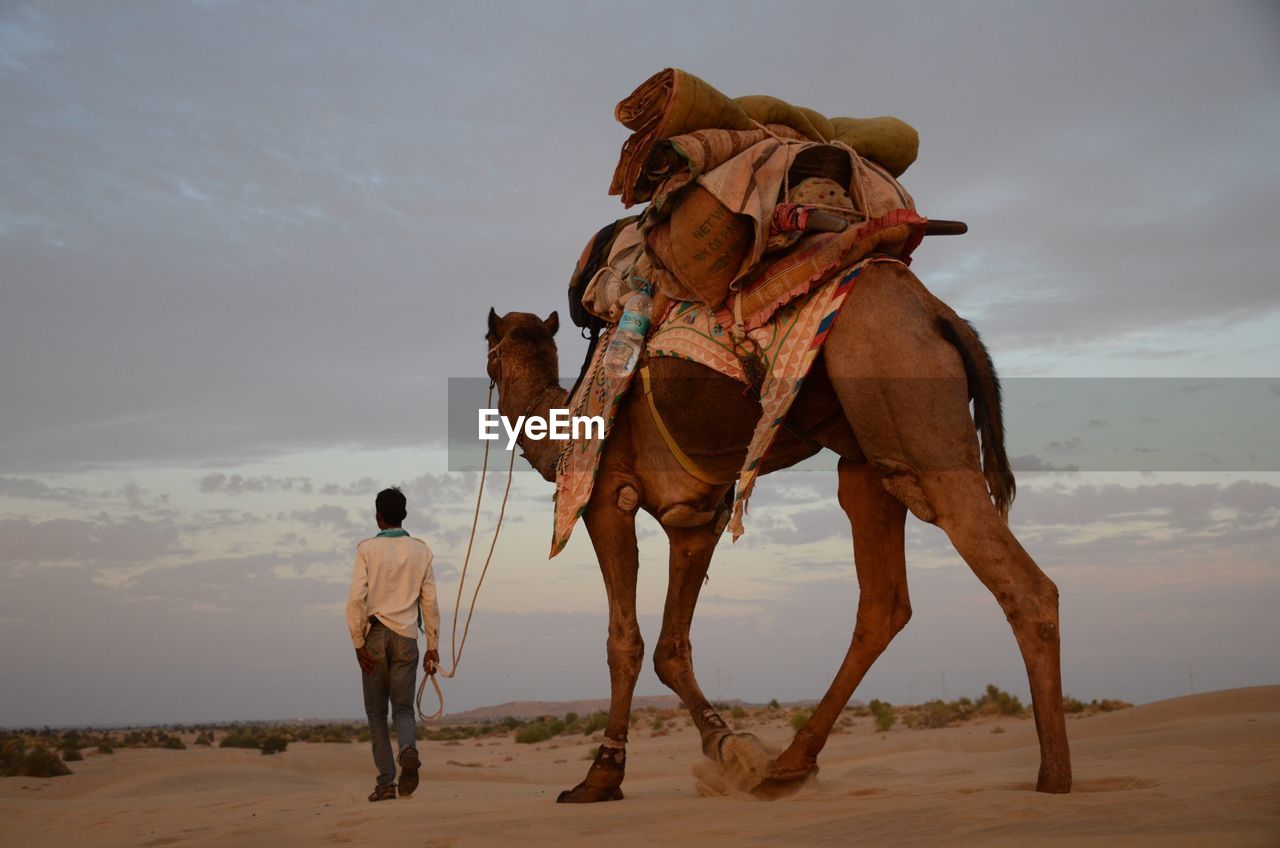 Rear view of man with camel in desert against sky