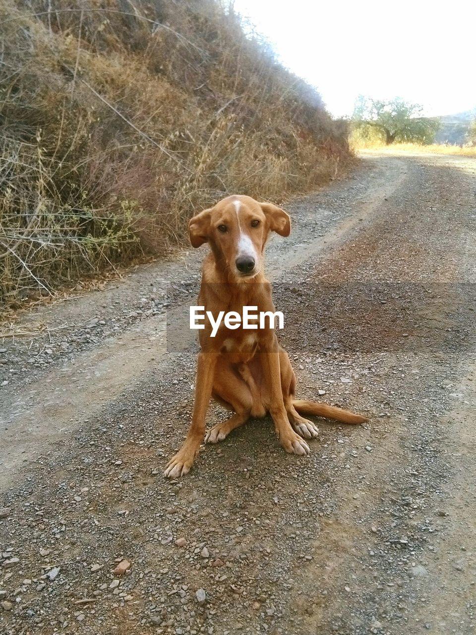 Portrait Of Dog On Road