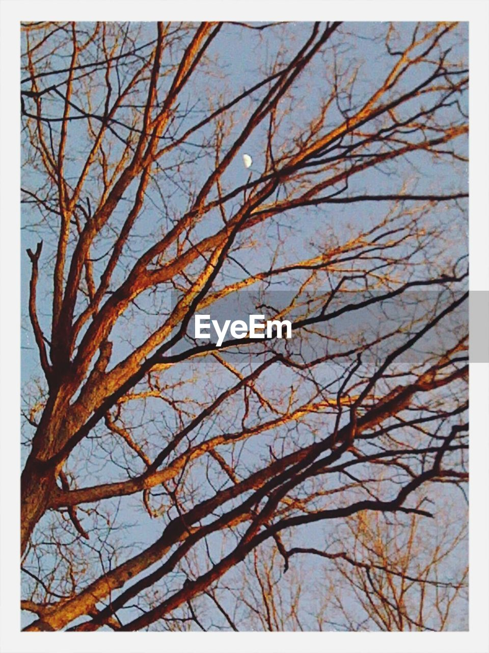 bare tree, nature, tree, day, branch, tranquility, no people, low angle view, outdoors, beauty in nature, sky, clear sky
