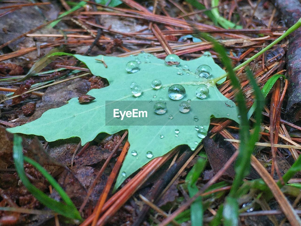 leaf, drop, water, green color, wet, nature, no people, growth, close-up, day, raindrop, fragility, outdoors, plant, freshness, beauty in nature