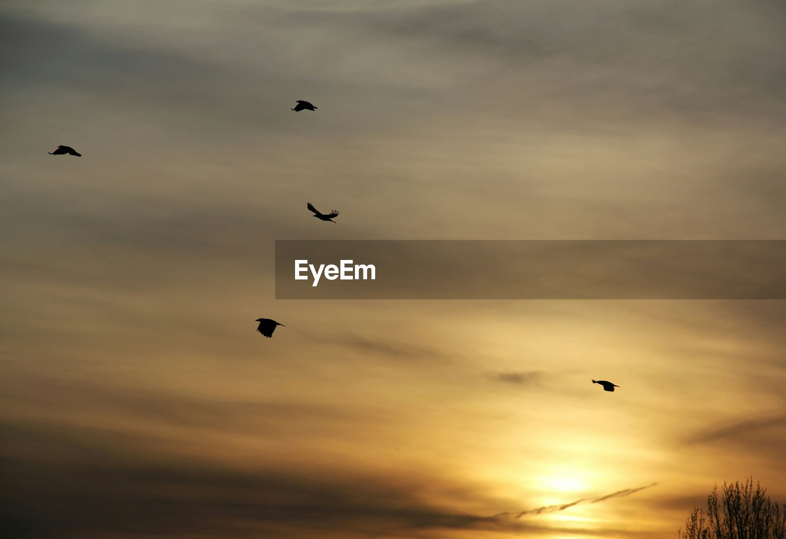 bird, flying, animal themes, animals in the wild, low angle view, wildlife, sunset, sky, silhouette, mid-air, cloud - sky, spread wings, beauty in nature, nature, flock of birds, orange color, scenics, cloud, tranquility, cloudy