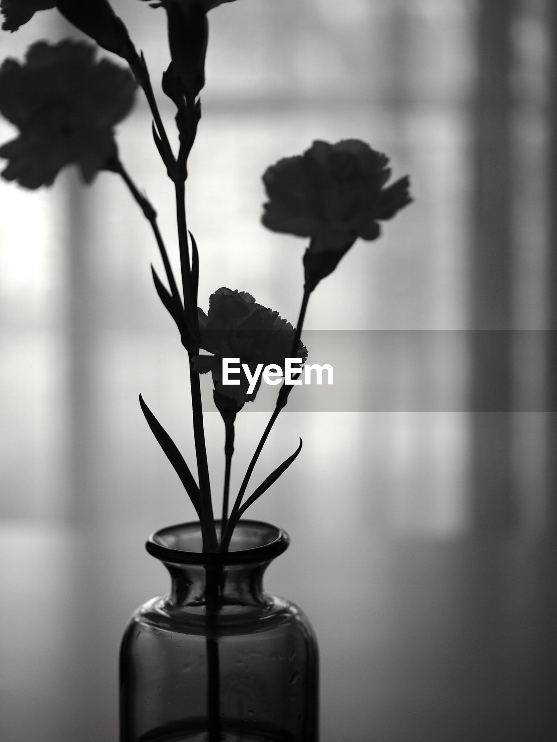 flower, plant, fragility, growth, close-up, indoors, potted plant, focus on foreground, vase, leaf, stem, wall - building feature, nature, home interior, window, glass - material, freshness, no people, day, built structure