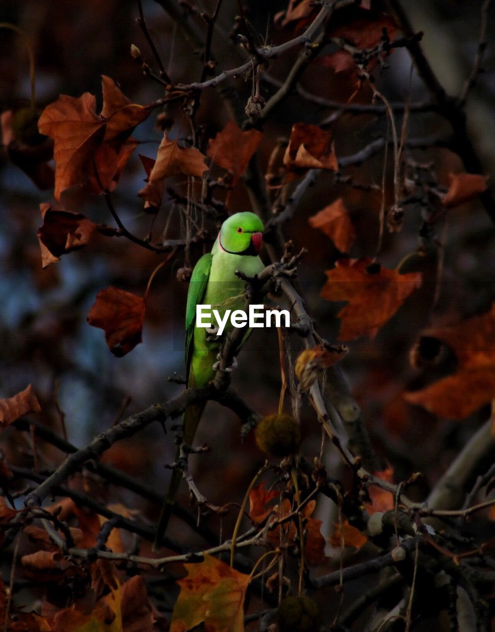 plant, animal, one animal, animals in the wild, animal themes, animal wildlife, no people, focus on foreground, nature, plant part, day, leaf, close-up, green color, vertebrate, branch, outdoors, tree, beauty in nature, perching