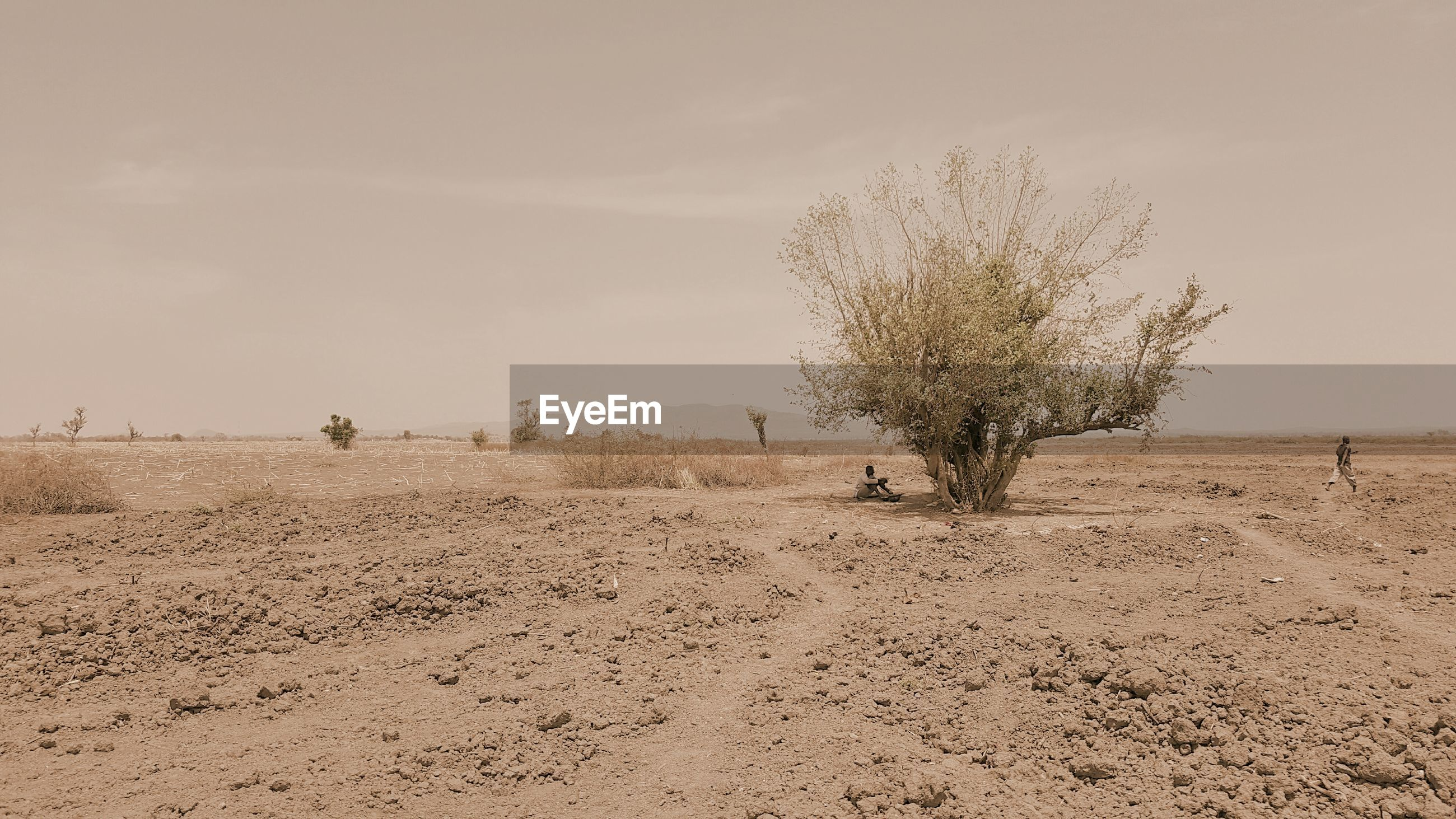 Tree on barren landscape