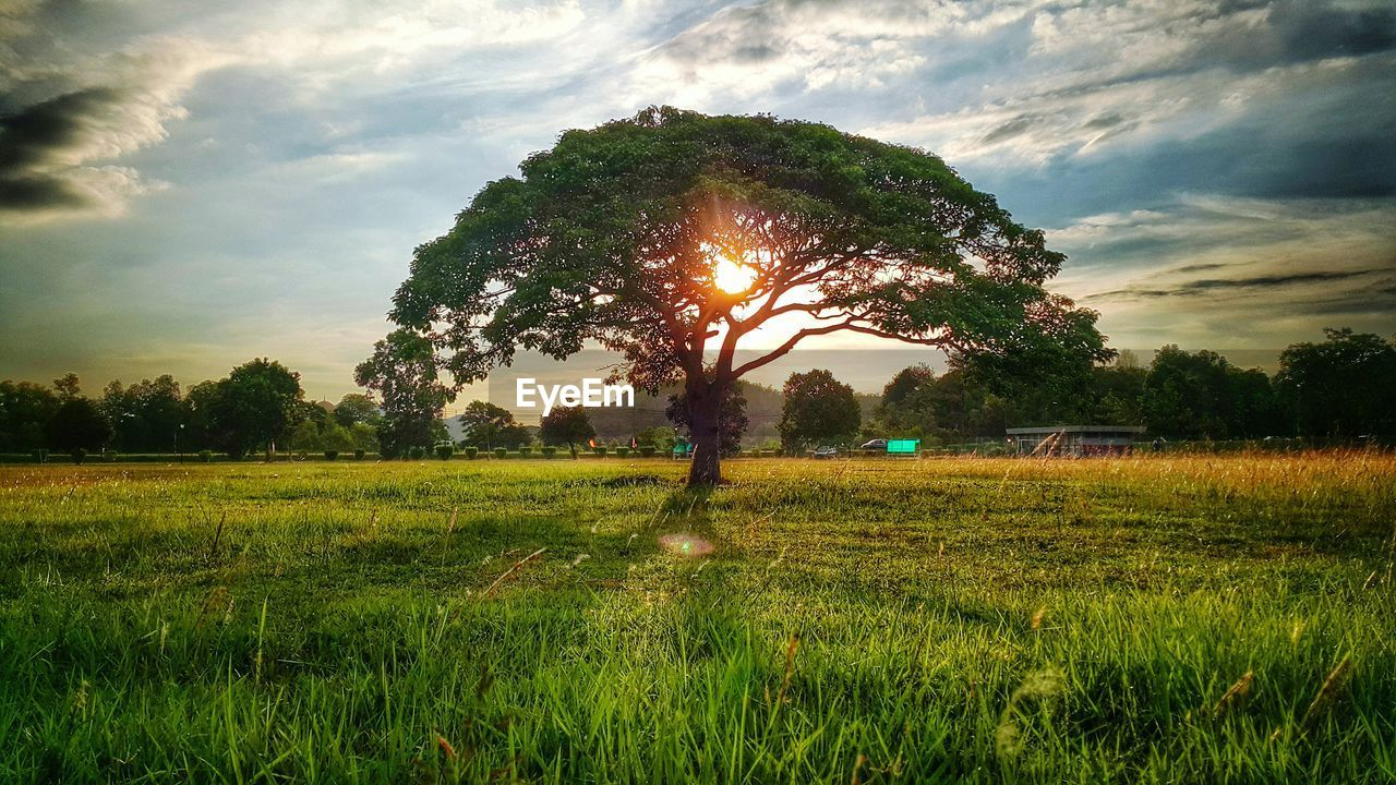 tree, nature, field, growth, sky, tranquility, tranquil scene, landscape, grass, scenics, beauty in nature, cloud - sky, sunset, outdoors, no people, rural scene, day