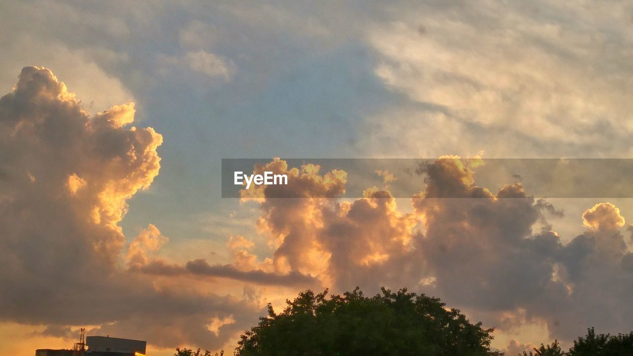 sky, cloud - sky, tree, sunset, nature, beauty in nature, low angle view, no people, scenics, growth, outdoors, tranquility, storm cloud, day