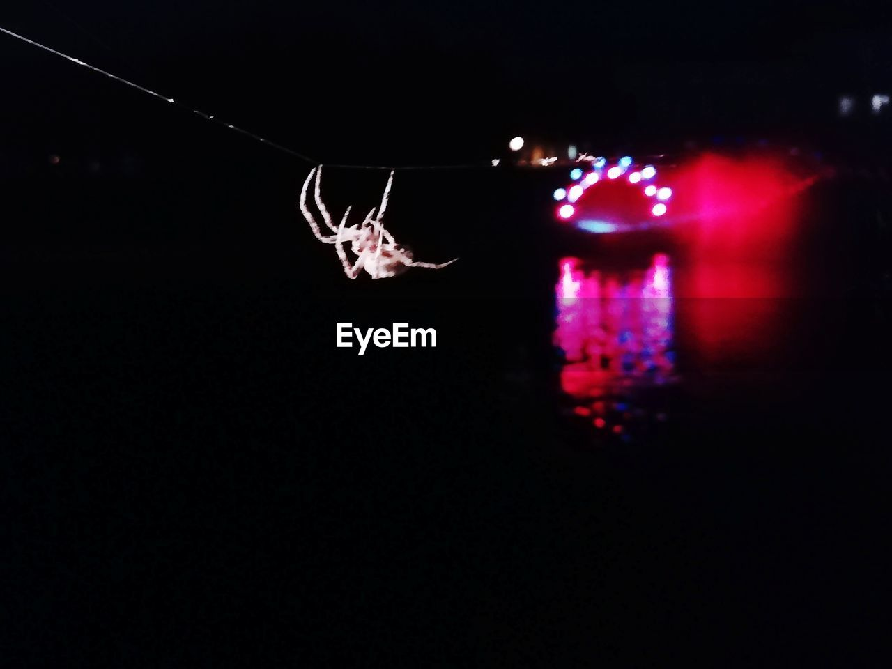 night, illuminated, copy space, no people, close-up, lighting equipment, nature, outdoors, dark, focus on foreground, motion, water, black background, glowing, light - natural phenomenon, purple, fragility, animal, nightlife