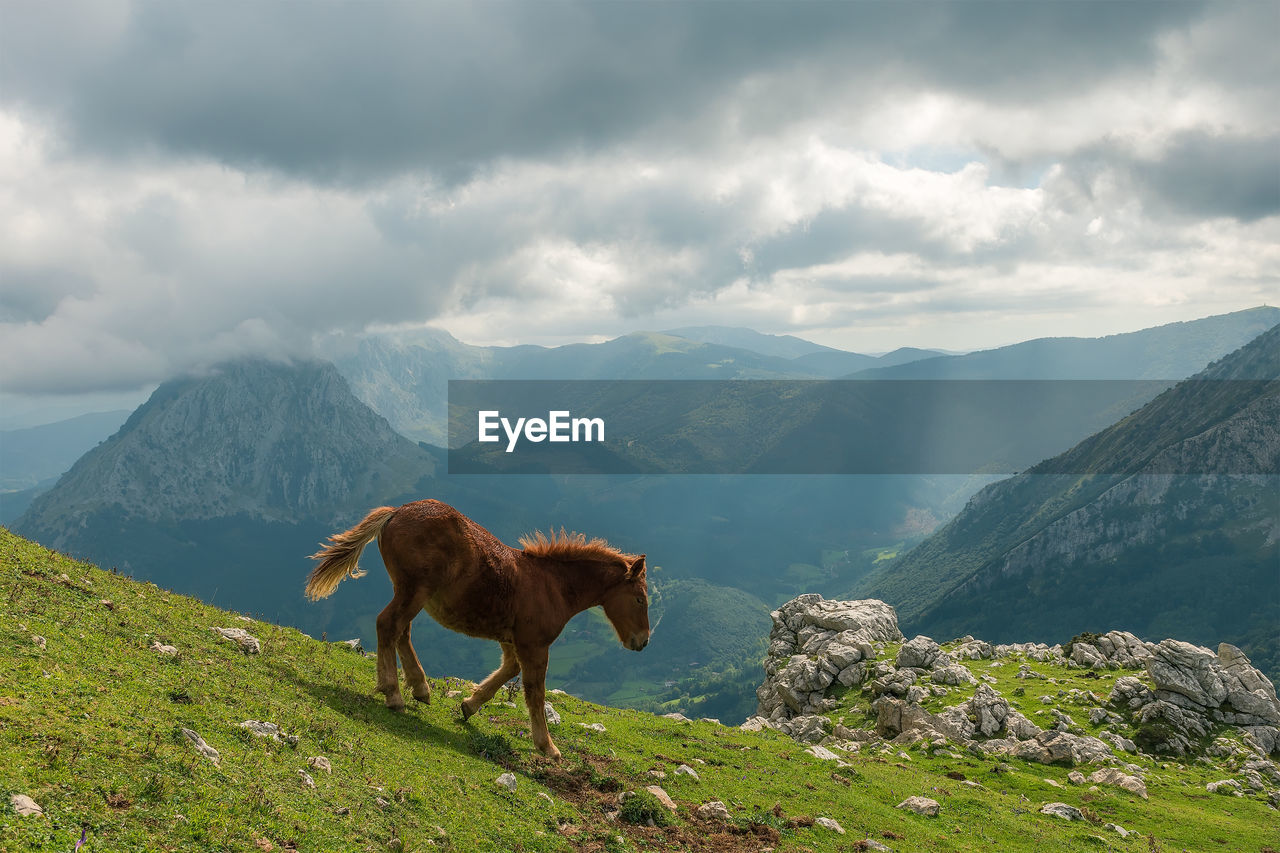mountain, cloud - sky, animal, animal themes, mammal, sky, scenics - nature, one animal, beauty in nature, domestic animals, vertebrate, domestic, pets, mountain range, nature, tranquil scene, environment, tranquility, livestock, no people, outdoors, herbivorous