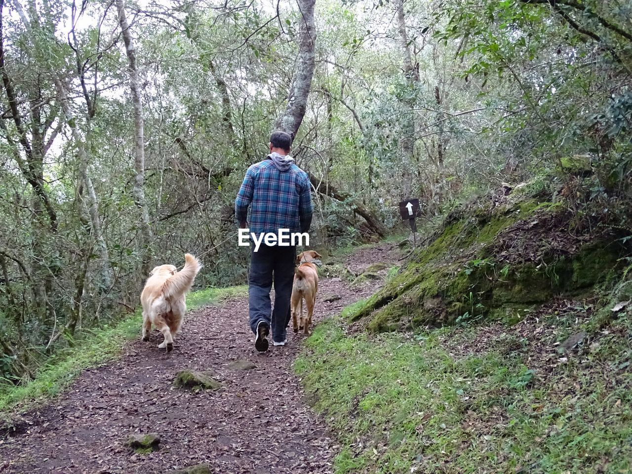 mammal, domestic, pets, domestic animals, animal themes, animal, tree, dog, canine, one animal, rear view, real people, plant, vertebrate, land, leisure activity, full length, walking, forest, one person, pet owner, outdoors