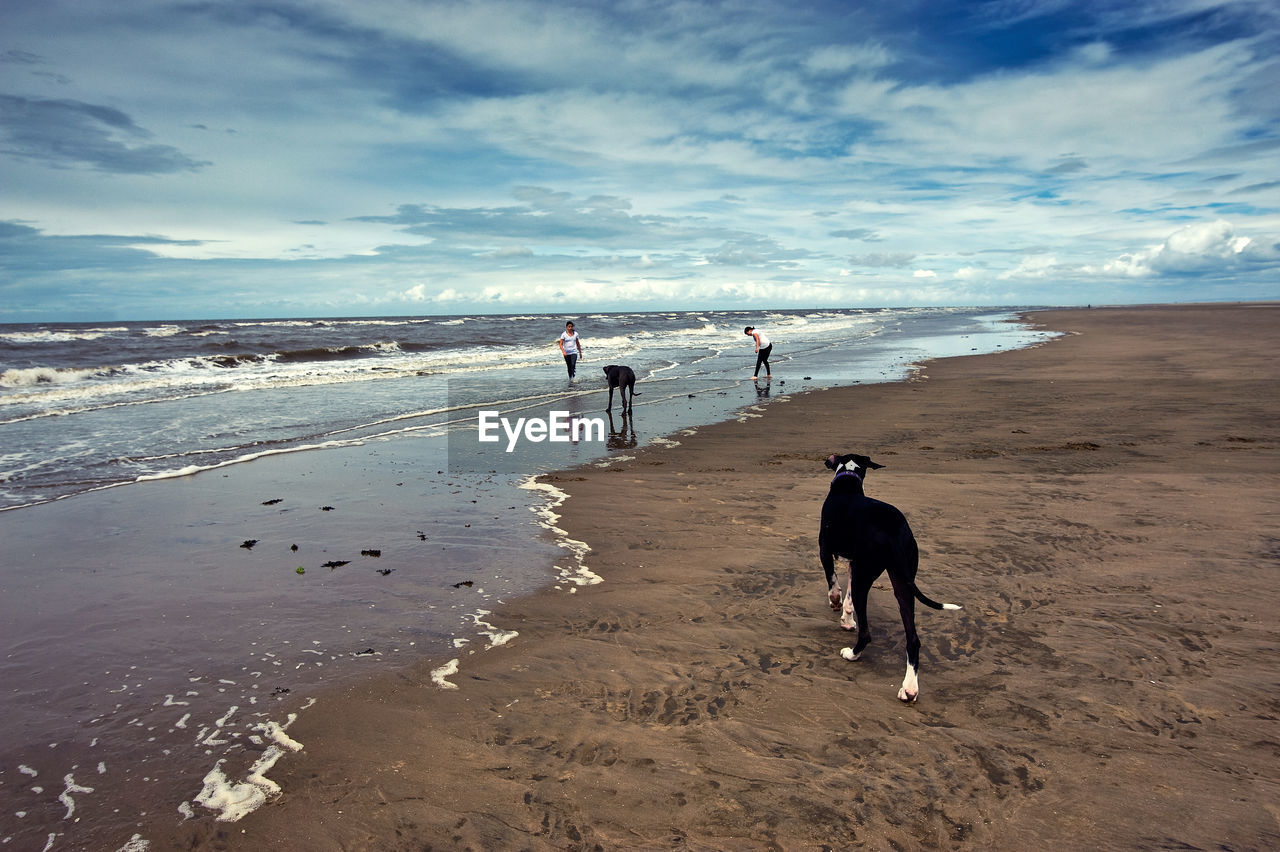 Girls with dogs on beach against sky