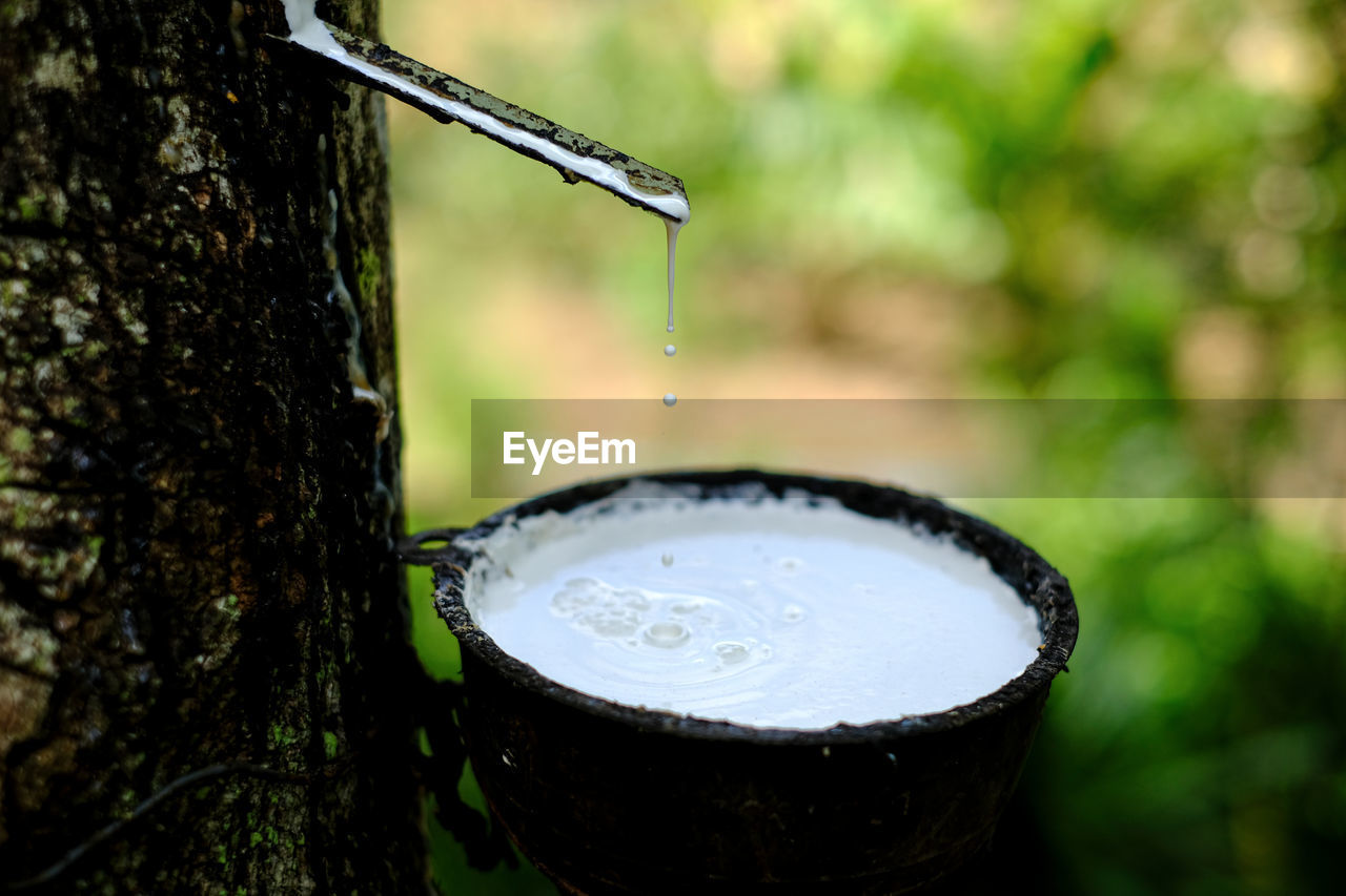focus on foreground, no people, nature, close-up, water, food and drink, refreshment, metal, drop, tree, day, plant, outdoors, drink, wet, tree trunk, freshness, trunk, motion, flowing, silver colored