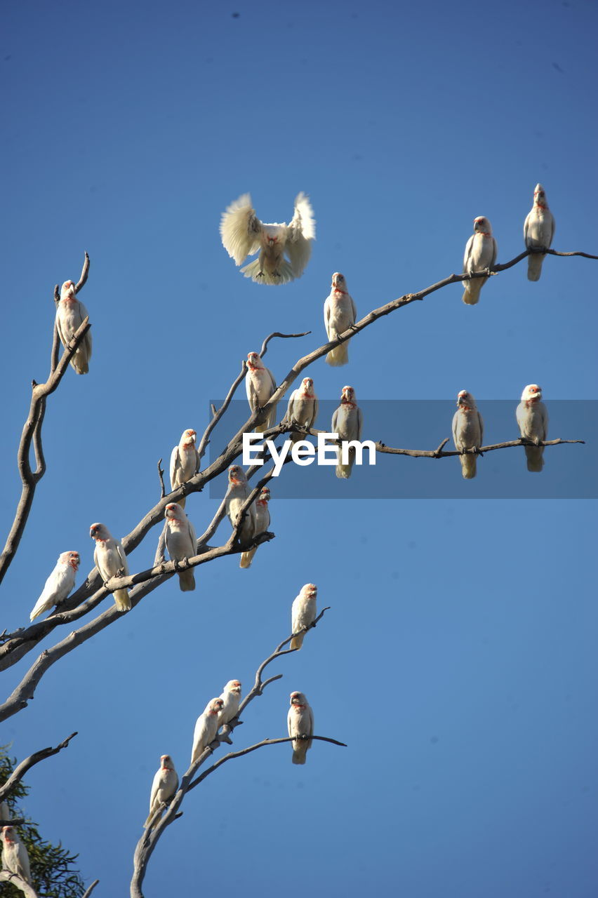 low angle view, sky, blue, no people, day, clear sky, nature, animal wildlife, animals in the wild, group of animals, bird, animal, animal themes, beauty in nature, vertebrate, outdoors, cable, perching, large group of animals, tree, flock of birds