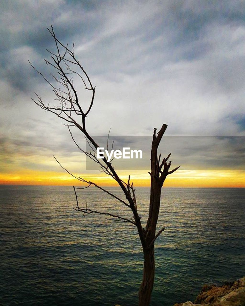 nature, sunset, tranquil scene, beauty in nature, tranquility, sky, scenics, sea, horizon over water, water, bare tree, outdoors, no people, cloud - sky, silhouette, tree, branch, dead tree, day