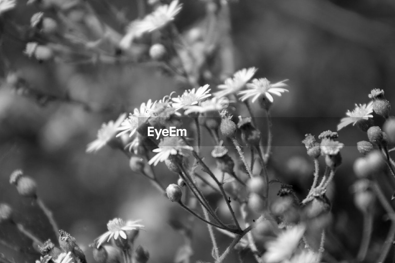nature, growth, flower, plant, one animal, no people, day, outdoors, beauty in nature, animal themes, fragility, animals in the wild, freshness, close-up, branch, tree, flower head