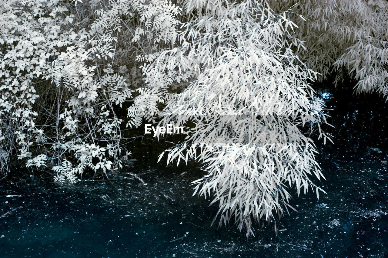 plant, nature, beauty in nature, no people, growth, day, cold temperature, winter, water, tree, snow, outdoors, frozen, tranquility, land, waterfront, white color, scenics - nature, flowing, snowing