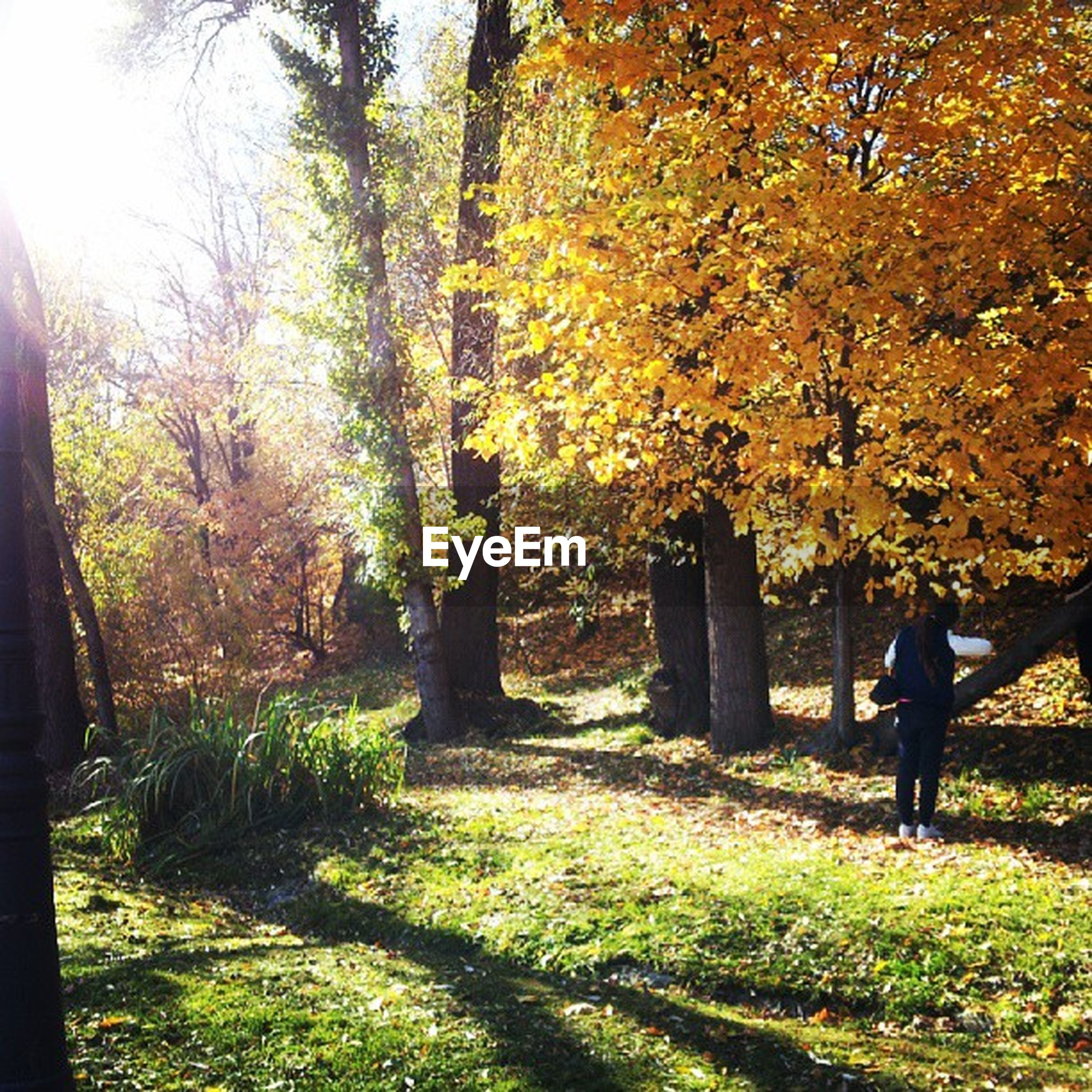 tree, autumn, lifestyles, rear view, leisure activity, men, growth, nature, season, beauty in nature, tranquility, change, person, walking, full length, branch, tranquil scene, standing