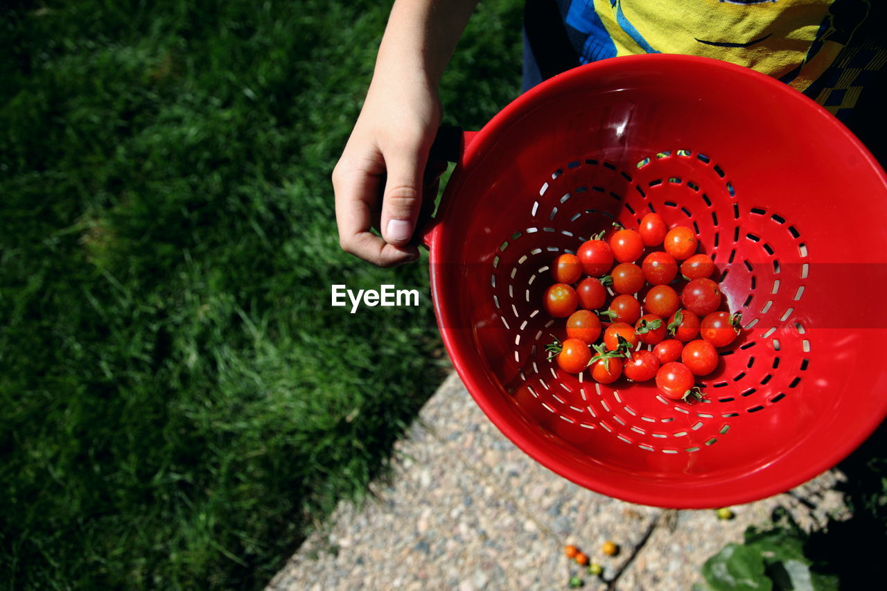 Midsection Of Person Holding Cherry Tomatoes In Container At Backyard